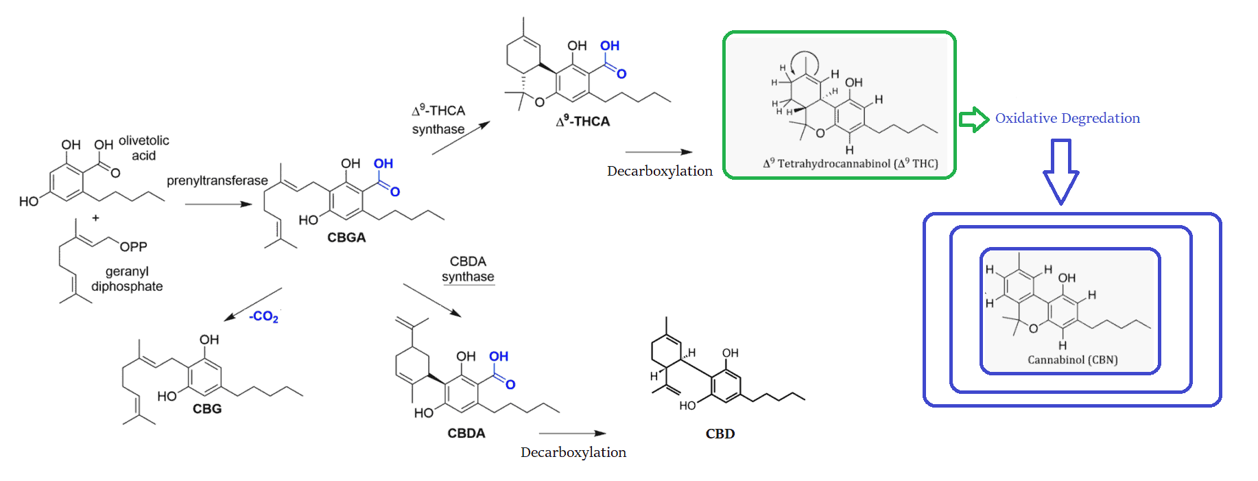 How cannabinoids are formed